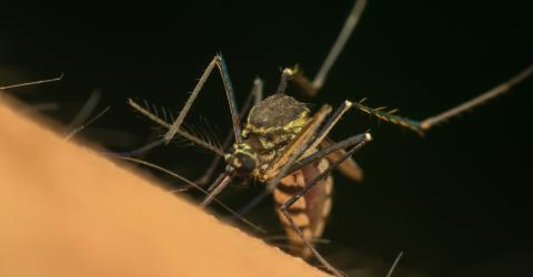 This Is The Best Way To Treat Mosquito Bites