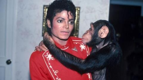Years Later, This Is What Really Happened To Michael Jackson's Pet Chimpanzee Bubbles