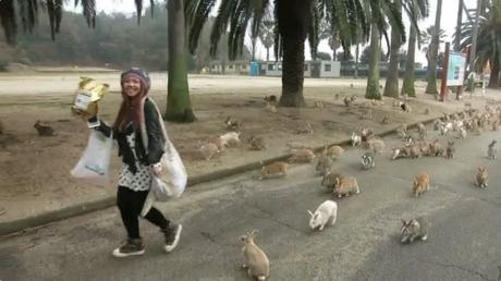 This Is Why Okunoshima Is Known As 'Rabbit Island'