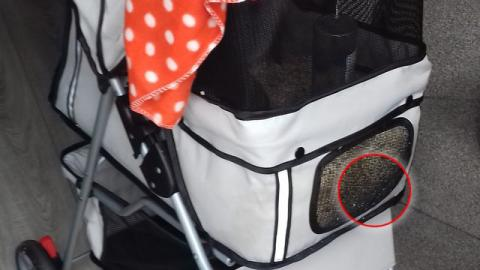 A Man Found Something Horrifying In This Abandoned Pram In The Middle Of The Night