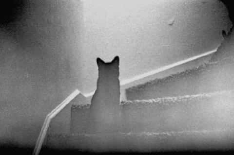 This Cat Vanishes On Video And No One Can Explain It
