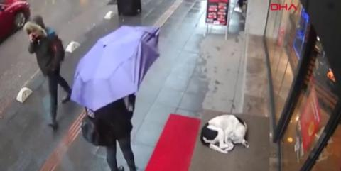 CCTV Footage Goes Viral After Capturing Woman's Kind Gesture Towards Cold And Stray Dog