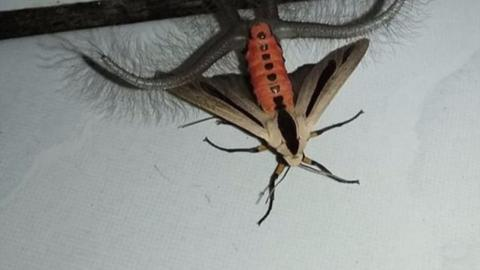 A Woman Was Left Terrified After Finding One Of These In Her Home... And She's Not Alone!
