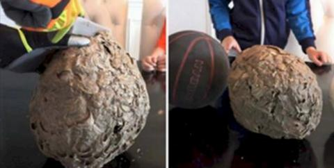 They Cut A Wasp's Nest In Half And This Is What They Found