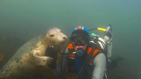 Everyone Is Talking About The Video Of This Diver And Seal
