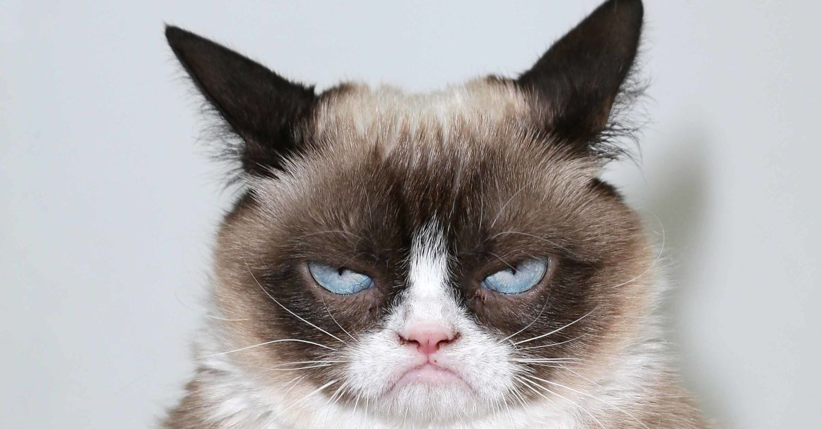 One Of The World's Greatest Memes, Grumpy Cat Has Died