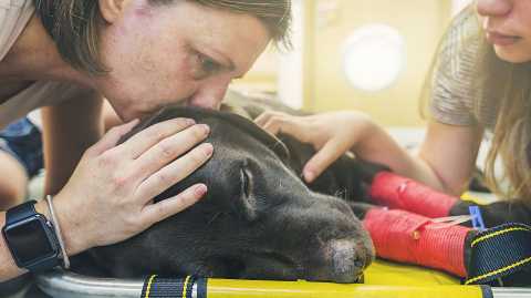 An euthanasia veterinarian reveals what animals feel before being put down