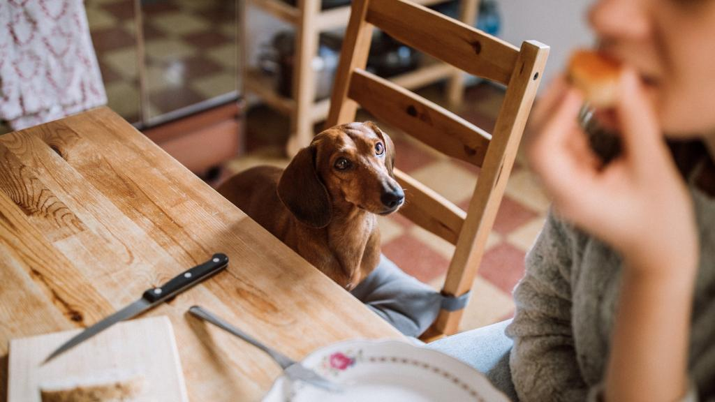 Feeding these foods to your pets could have deadly consequences