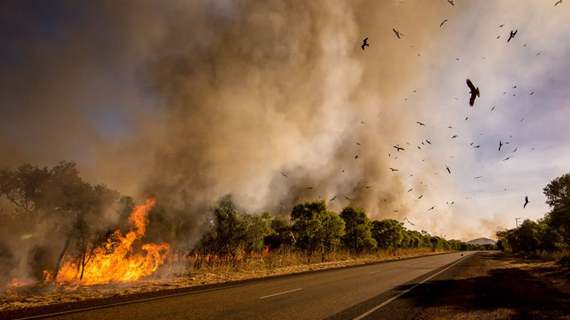 Almost Half A Billion Animals Have Died In The Australian Bush Fires So Far