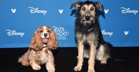He Was Abandoned By His Owners - Now He's The Star Of Disney's Lady And The Tramp