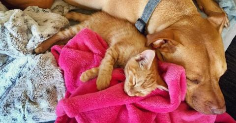This Video Proves Cats And Dogs Really Can Be Best Friends