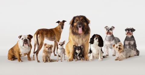 This Dog Breed Could Soon Disappear, And We Are To Blame