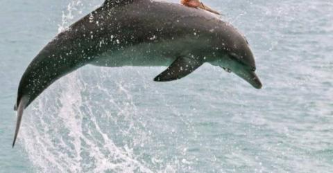She Took A Photo Of This Dolphin Then Noticed Something Very Strange On Its Back