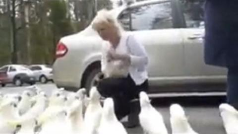 She Thought She Was Feeding The Pigeons, Then She Got A Big Surprise