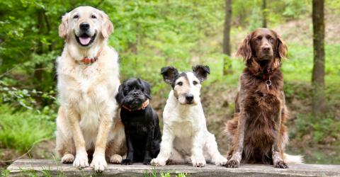 These Are The 5 Most Playful Breeds Of Dogs