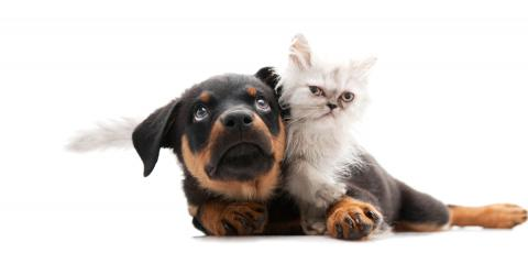 Here Are 5 Cat Breeds That Get Along Well With Dogs