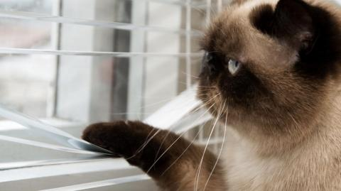 The 6 mistakes vets say every cat owner must stop doing
