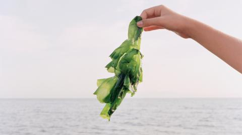 Here's why seaweed is becoming a major player in skincare