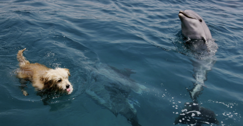 This Dog Went For A Swim, And Was Joined By An Unlikely Friend