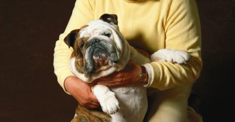 According To A Study, Dogs Are More Likely To Be Overweight If Their Owner Is Overweight