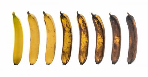 Which Of These Bananas Is Best For Your Health?