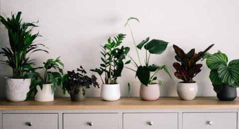 Researchers confirm that houseplants can relieve lockdown stress