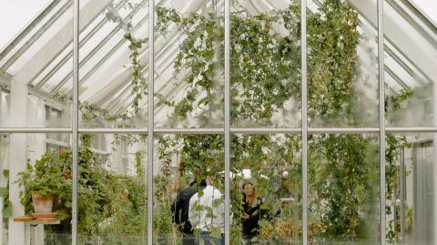 Lidl is selling a walk-in greenhouse for less than £40