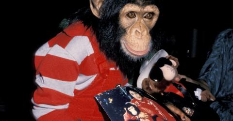 Michael Jackson: Here's What Happened To Bubbles, His Poor Chimpanzee