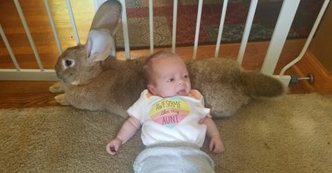 Bunnies & Babies: the cutest friendship you'll ever see
