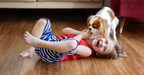 The Top 5 Family Friendly Dog Breeds