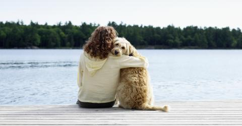 If You Love Your Pets You Need To Know These Animal First Aid Tips