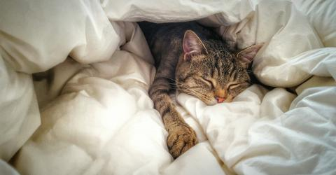 Here's why your cat crawls into bed with you at night