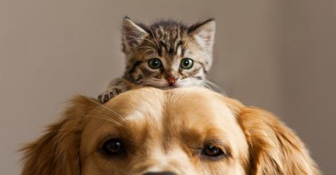 These 5 cat breeds would make great companions for your dog