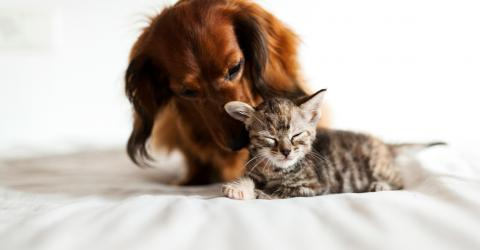 These Gorgeous Pets Are Proof That Cats And Dogs CAN Be Friends
