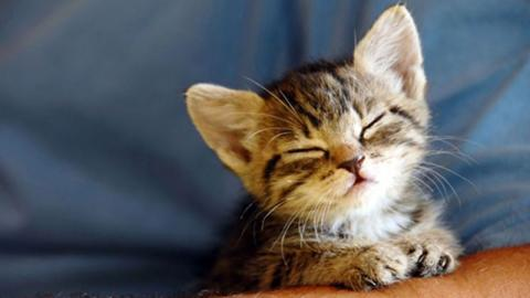Scientists have created the perfect music for cats!