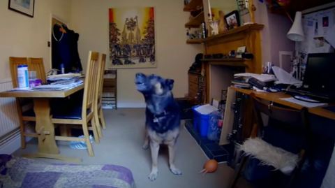 After seeing this video, she vowed never to leave her dog home alone again