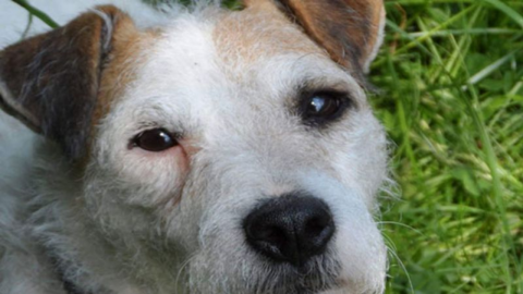 This dog was trapped underground for six days and lived to tell the tale