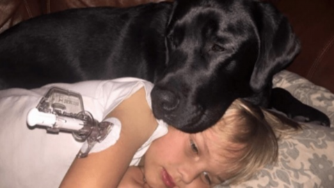 This Incredibly Heroic Dog Saved A Little Boy's Life