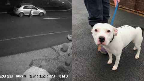 CCTV captures the heart-wrenching moment of a dog being abandoned on the side of the road