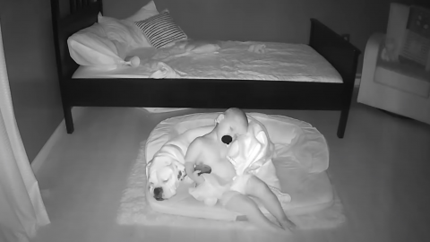 Nanny Cam Footage Captures the Special Bond Between a Baby and His Dog