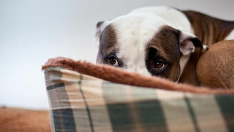 Bonfire Night: Study shows over 2 million dogs set to suffer, so how can we help them?