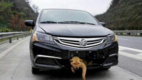 A man drove 200 miles with a dog stuck on his bumper