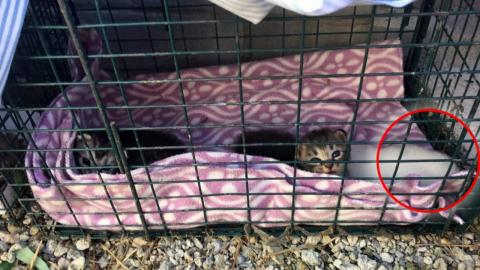 They adopted three kittens and made a shocking discovery