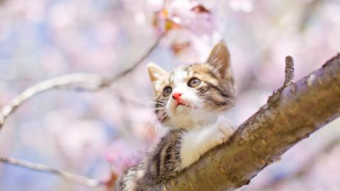 These 10 flowers are toxic for your cat