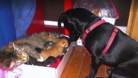 This dog has the most heartwarming reaction to a cat giving birth