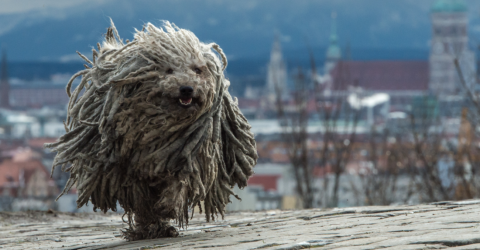 This mistreated dog's makeover will leave you stunned