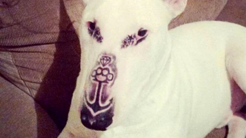 This cruel man tattooed his dog... And people weren't happy about it