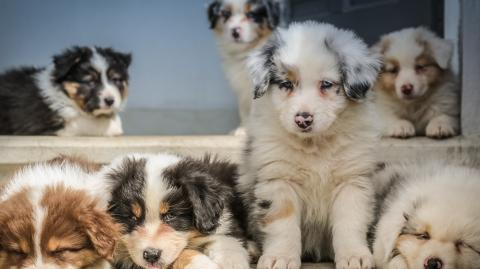 Puppies bought during lockdown are now being resold