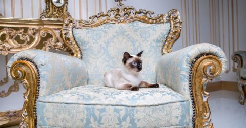 These are the top 5 most expensive cat breeds in the world