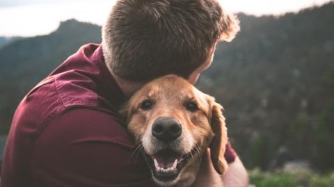 How to befriend your pet?
